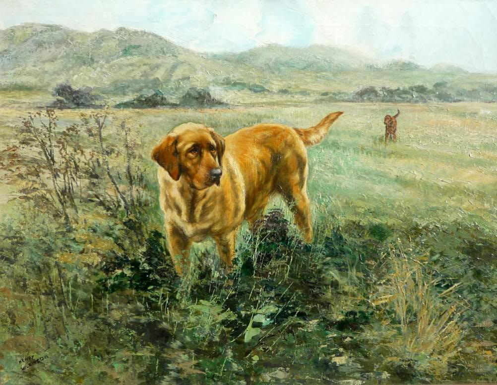 In the field - Golden Labrador and Red Setter