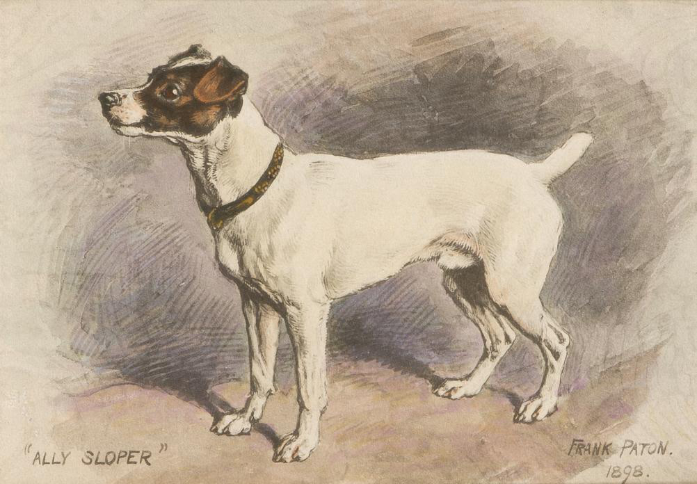 Ally Sloper - a Jack Russell Terrier