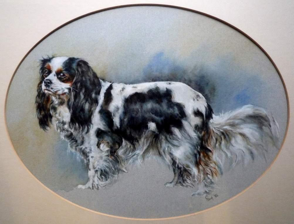 'Sally' - King Charles Spaniel