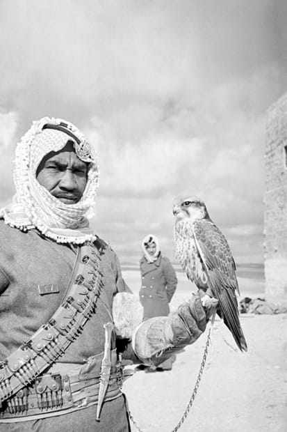 George Rodger, Camel Corps soldier. A Camel Corps soldier holds his tame hawk which he uses for hunting birds in the desert, 1952.