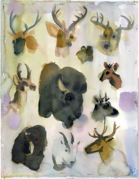 Joseph Peragine, AMNH: Taxonomy North American Mammals, 2015