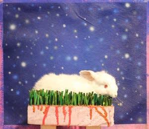 Joseph Peragine, White Rabbit on Field of Stars, 2015