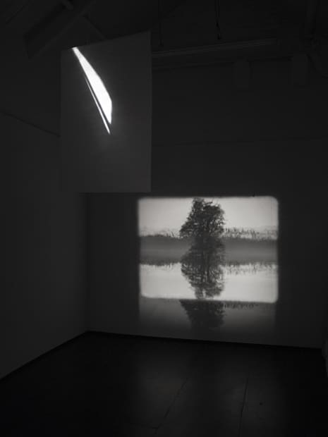 Guy Sherwin Tree Reflection #4, 2016 (1998) Installation for 16mm projector, glass, 3 minute film loop (GSN005)