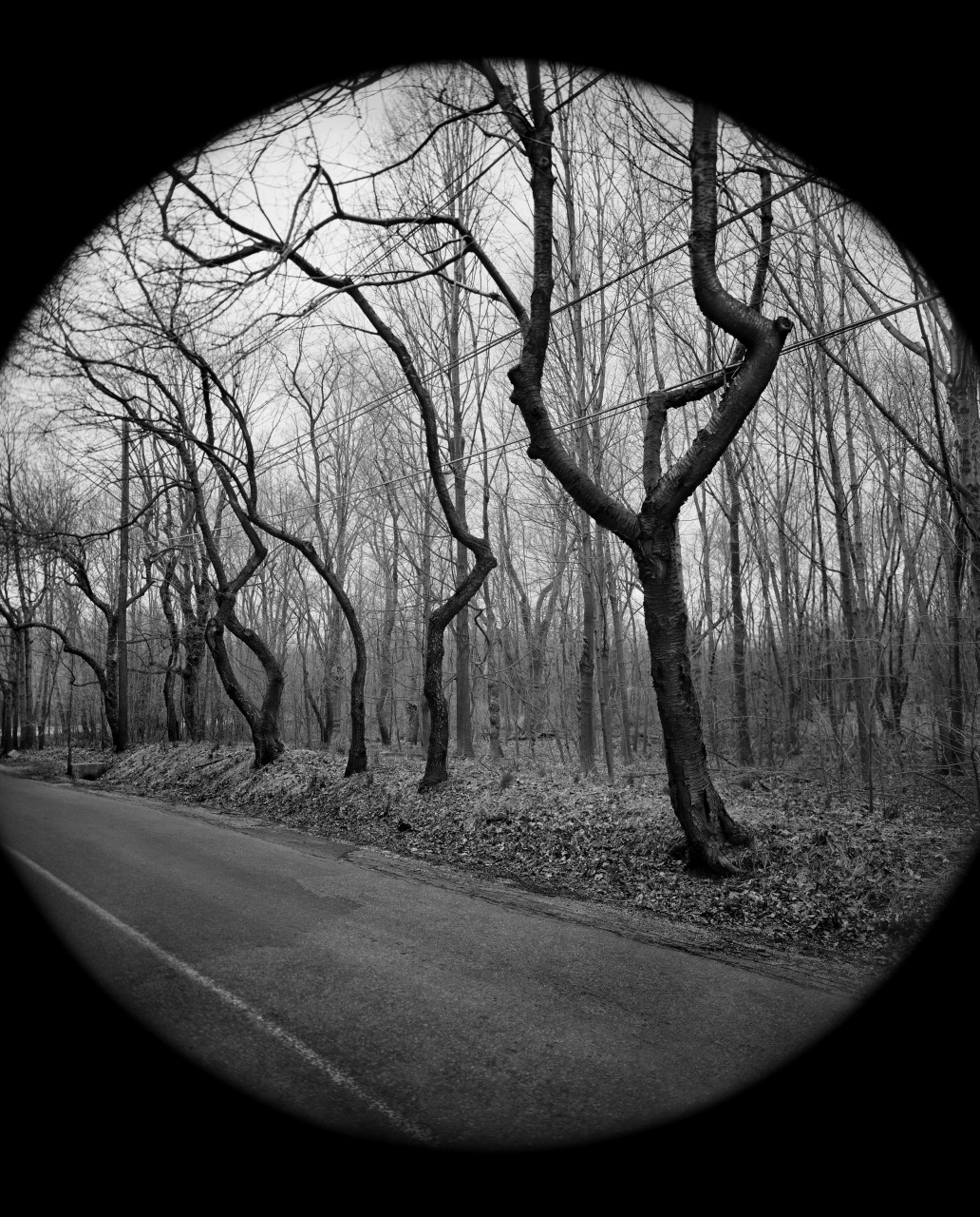 Scott Mead, Dancing Trees, 1975