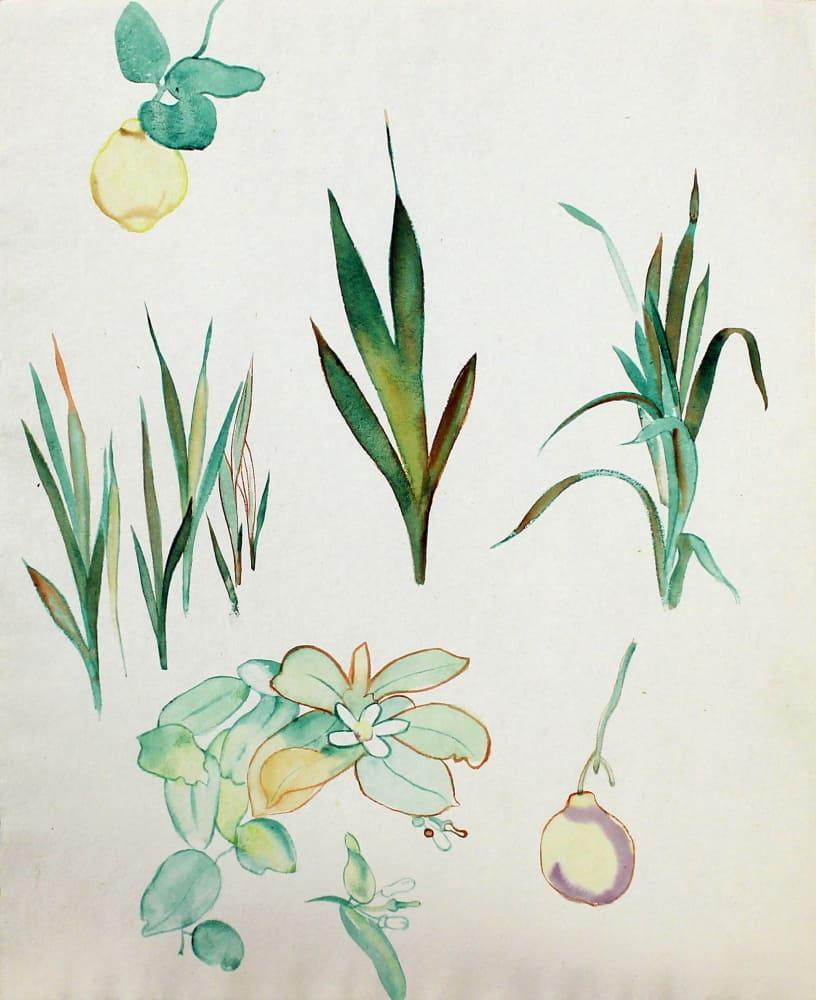 Study of Fruit and Flowers, Waikanae