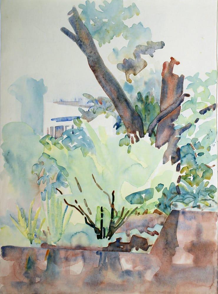 Tree Study, Thorndon