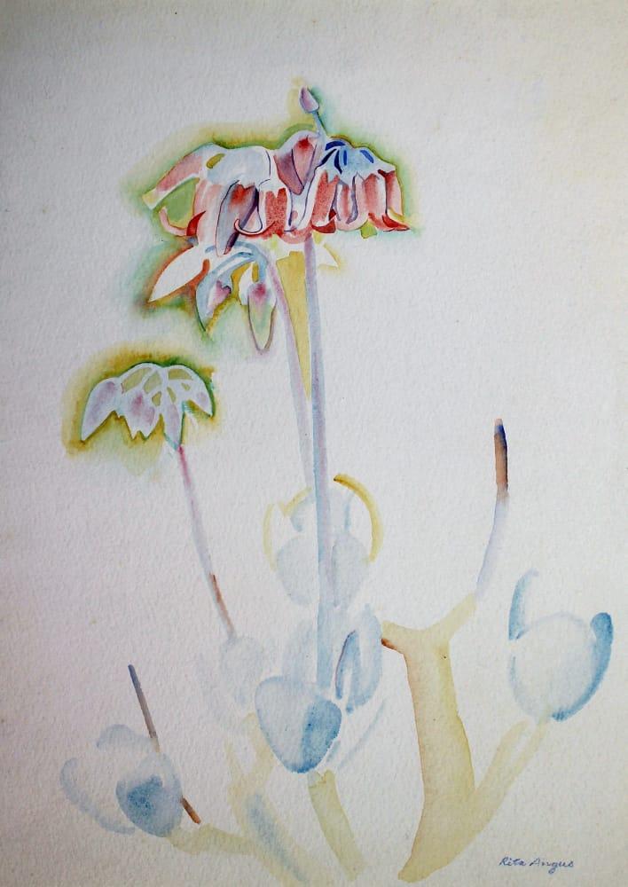 Flower Study (Waikanae)