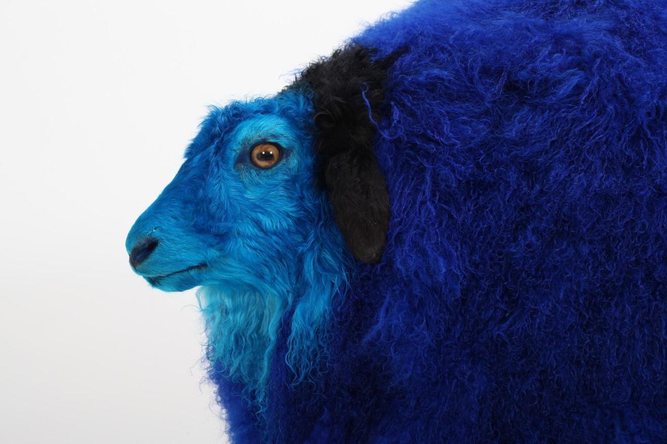 Yang Maoyuan, Sheep n°16, 2011