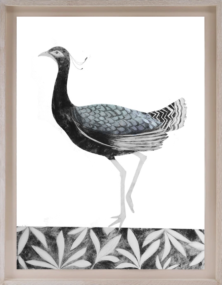 Beatrice Forshall, Lesser Florican (Framed)