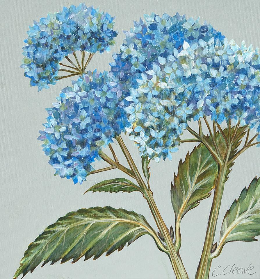 Caroline Cleave, Blue Hyrdrangeas