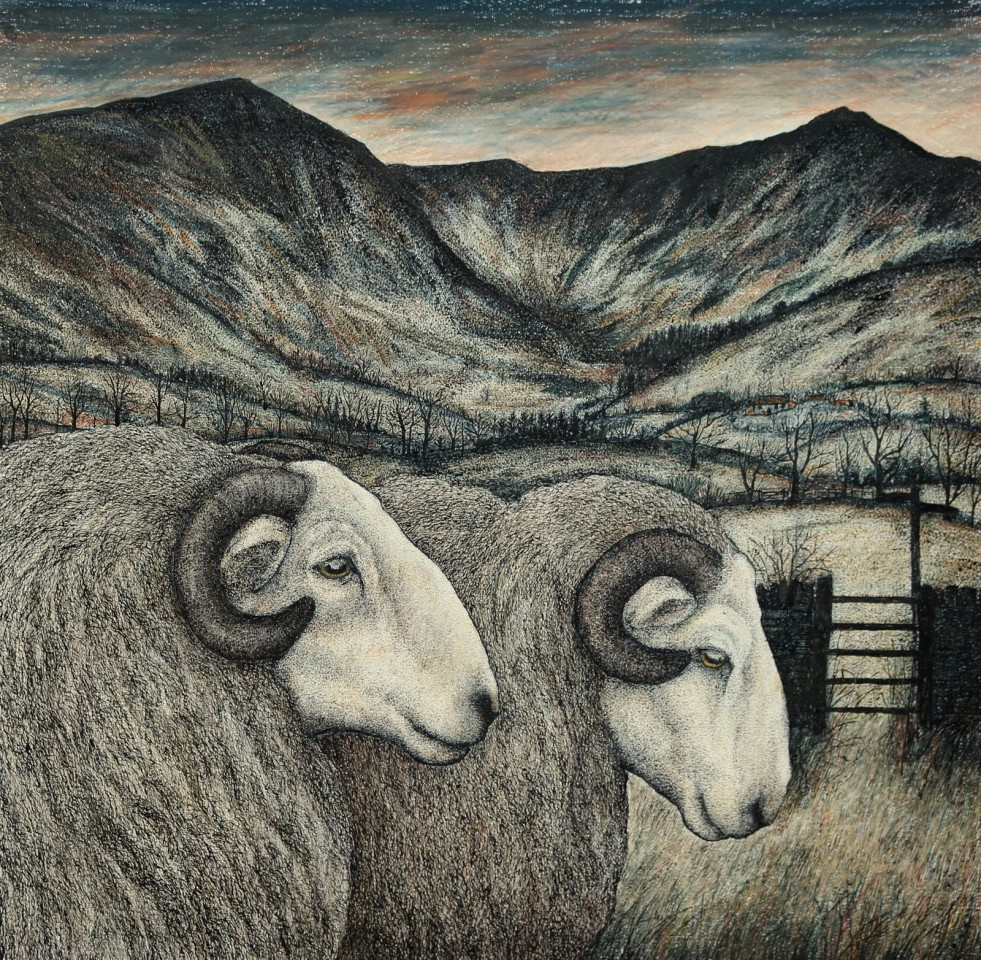 Seren Bell, Welsh Mountain Rams