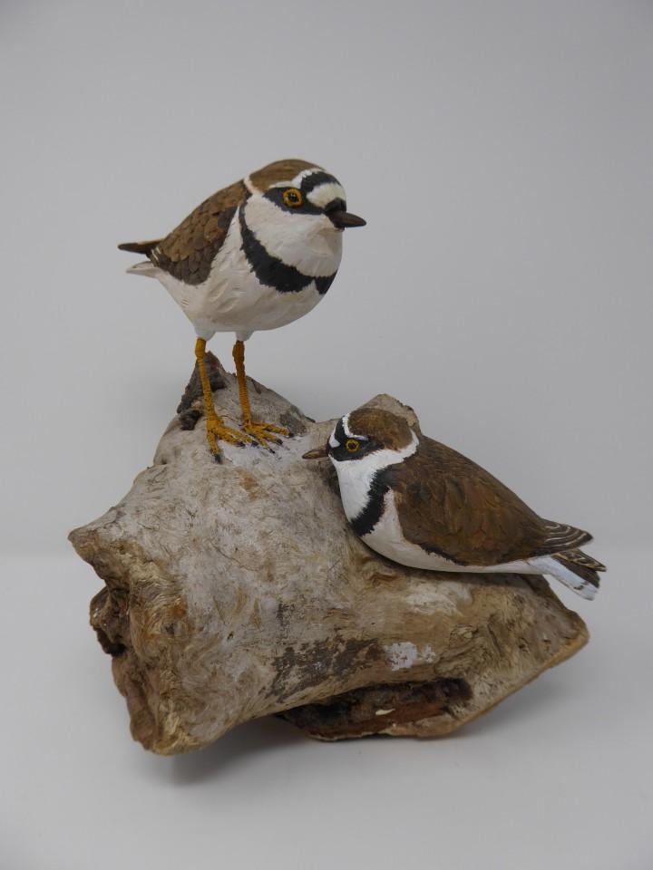 John & Marilyn Davies, Little Ringed Plovers