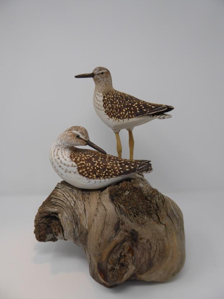 John & Marilyn Davies, Wood Sandpipers