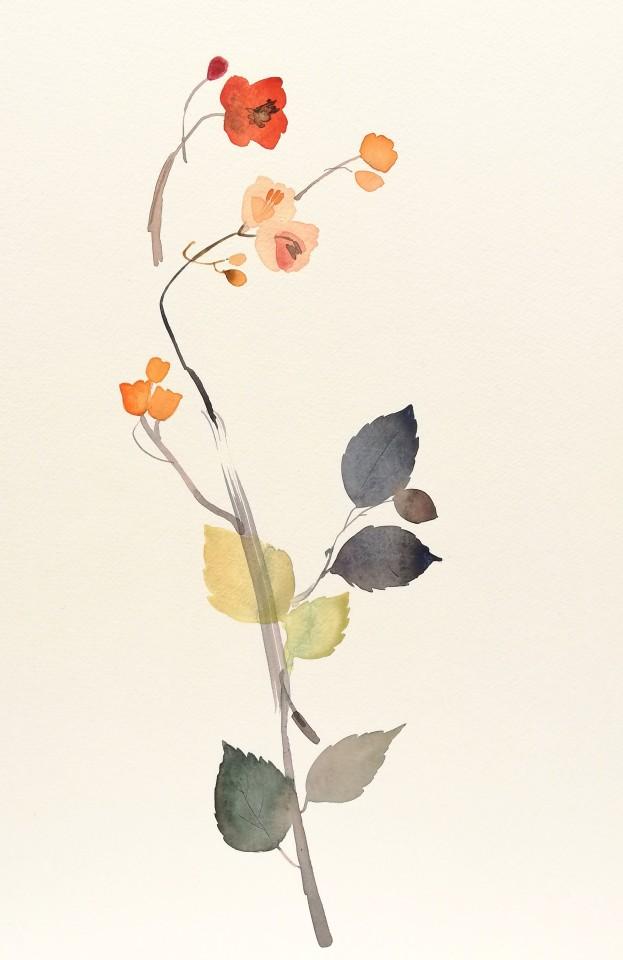 Susan Kane, Sweet Peach Rose