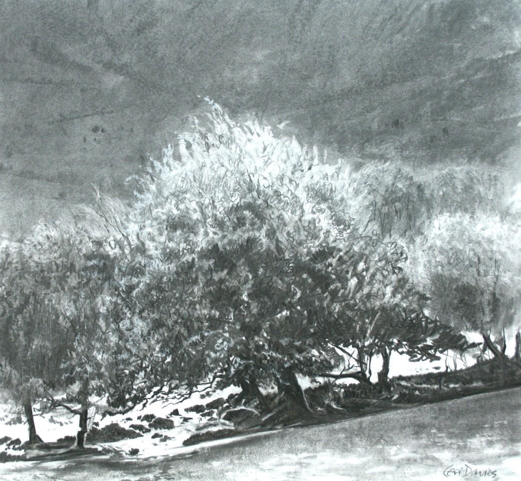 Ceri Auckland Davies, Hawthorn Tree (Cwm Cywarch)