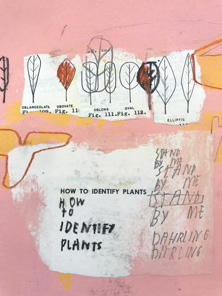 Jimmie James, how to identify plants/ stay here, 2016