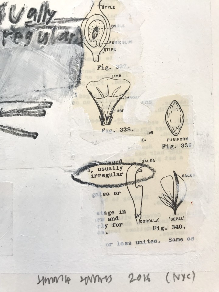 Jimmie James, how to identify plants/ usually irregular, 2016