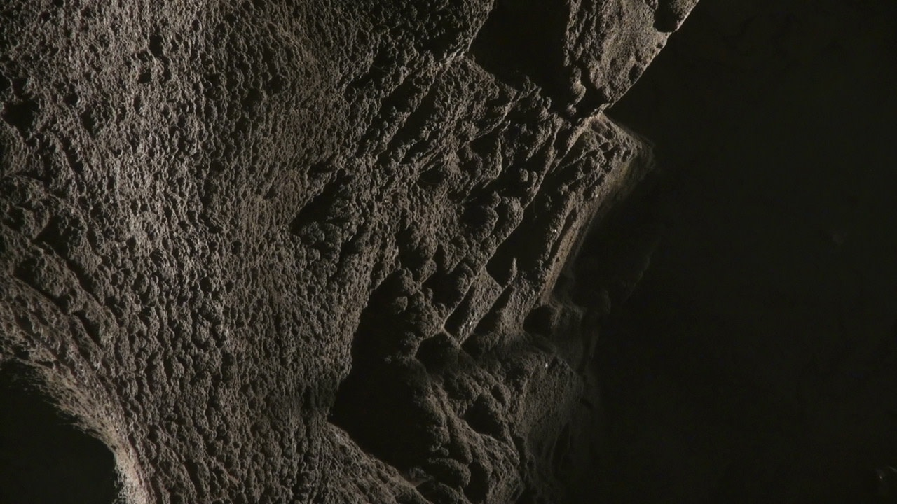 """Bernd Behr, Akeley Inside the Elephant, 2014, HD Video, colour, sound, 6' 25"""" looped"""