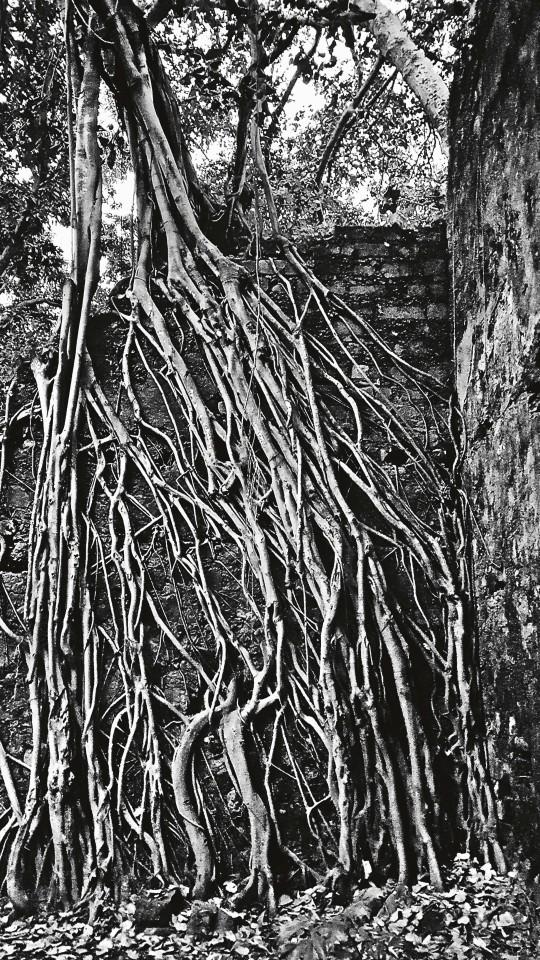 William Dalrymple , Overgrown Basilica, Bassein