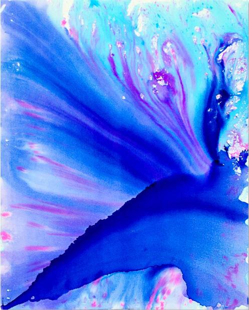 Blue Iris, 2016