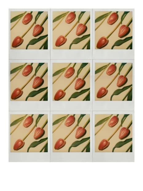 Trois tulipes roses, Paris, 1982