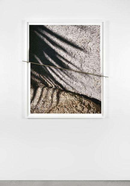 Joshua Tree Bronze Push (Shadows Half Split), 2016