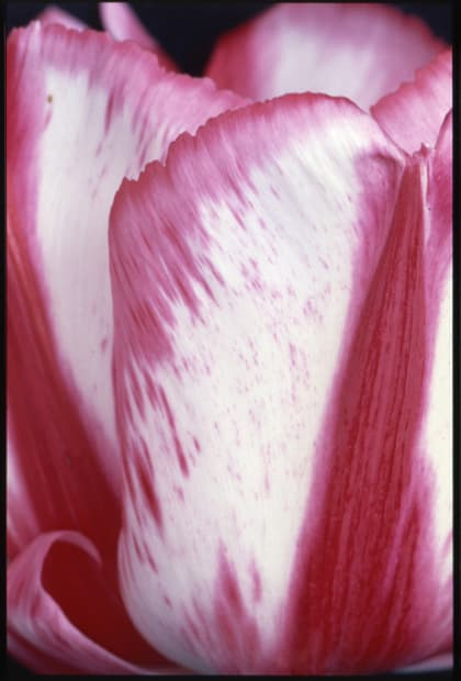 Flammes roses et blanches, 30 avril 1992