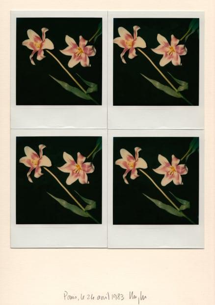 deux tulipes mauve et blanc, 1983