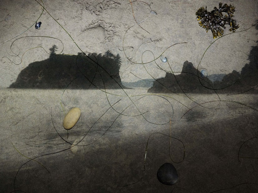 Tent-Camera Image on Ground: View of Sea Stacks Looking North, Ruby Beach, Olympic National Park, Washington, 2012