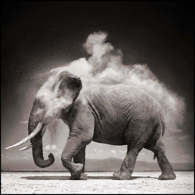 Elephant with Exploding Dust, Amboseli, 2004