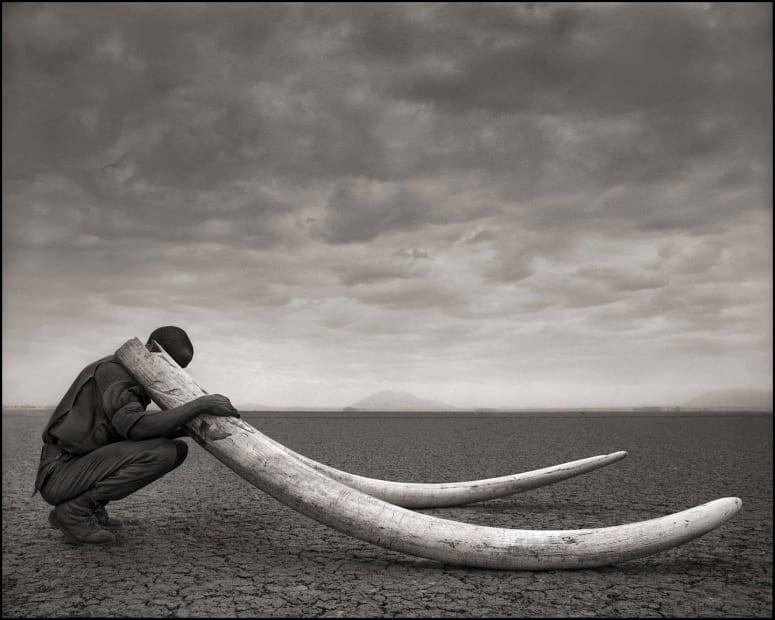 Ranger with Tusks of Killed Elephant, Amboseli, 2011