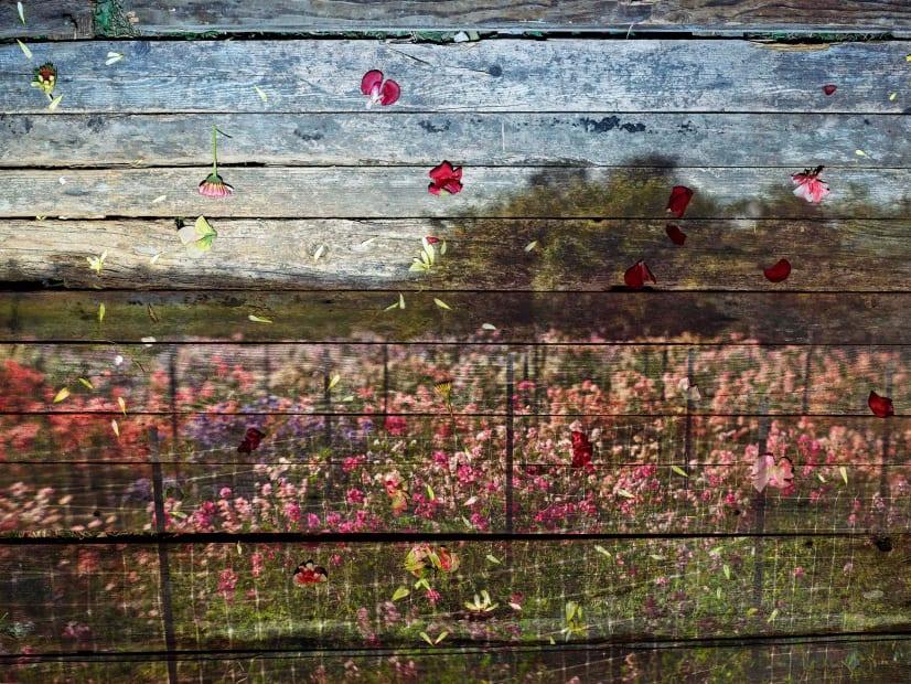 Flowers for Lisa #49 - Tent-Camera Image on Ground: Floret Flower Farm, 2017