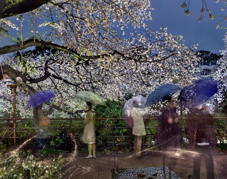 Hanami #2, Chidorigafuchi, Thursday, April 3rd, 2014