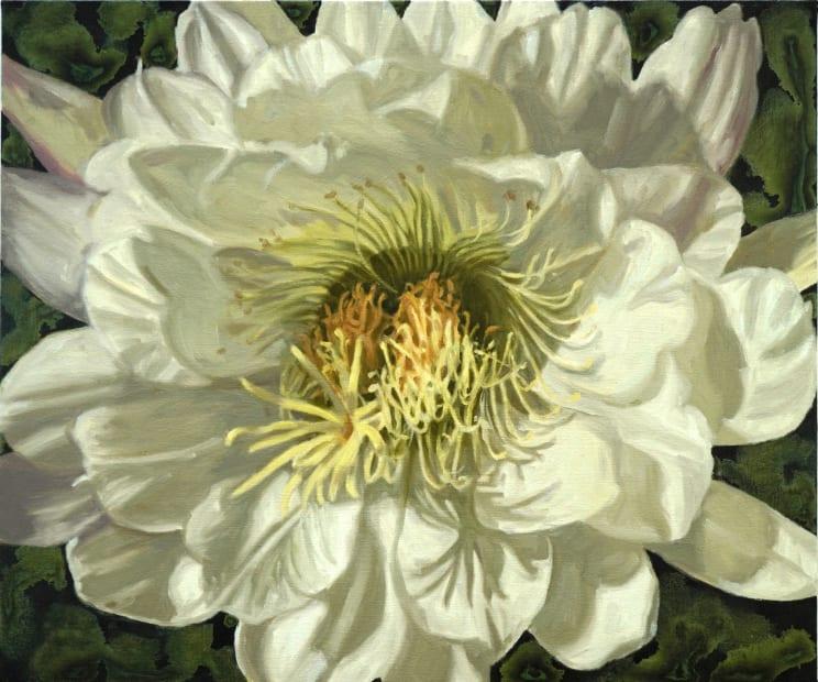Gail Roberts, Orchid Cactus, 2019