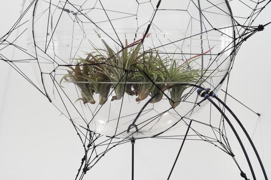 Biosphere 06 [detail], 2009