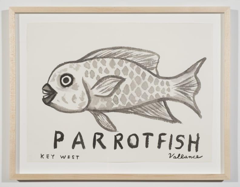 Key West Grinning Parrotfish, 2013