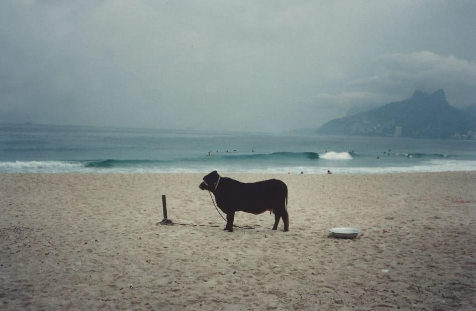 Cow (M=f/ W=f), 1994