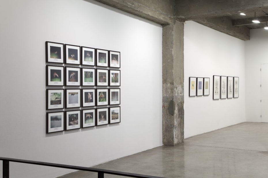 installation view of framed photos