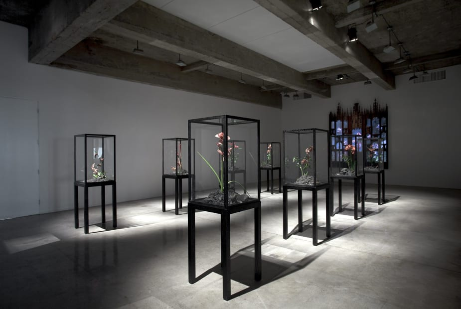 installation view of Collishaw sculptures