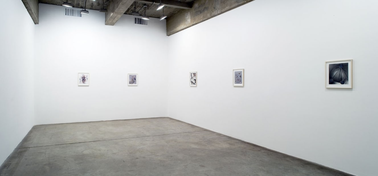 Wermers works on paper installation image