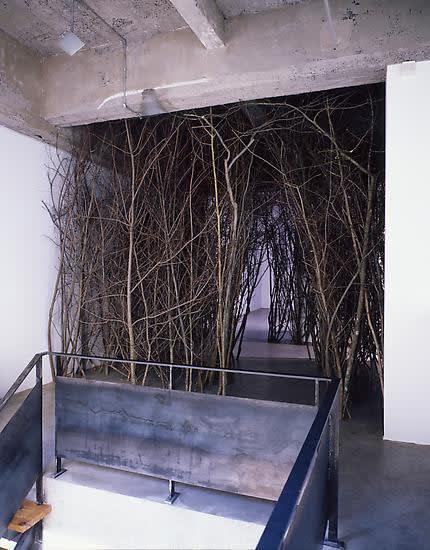 Eliasson tree forest installation