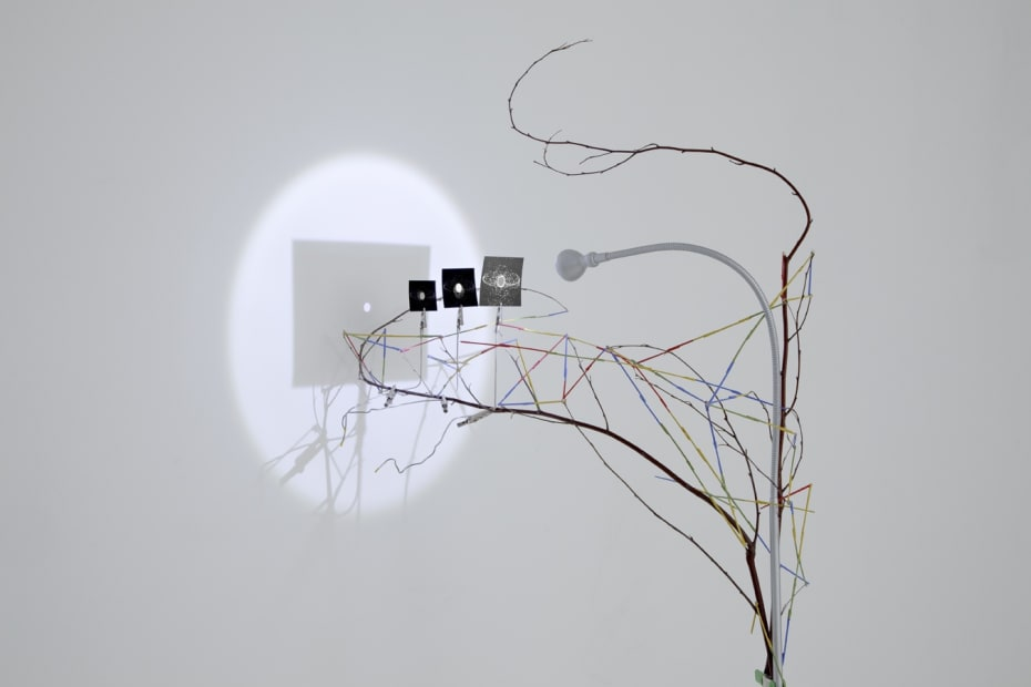 Image of sculpture with branches, paper, and light
