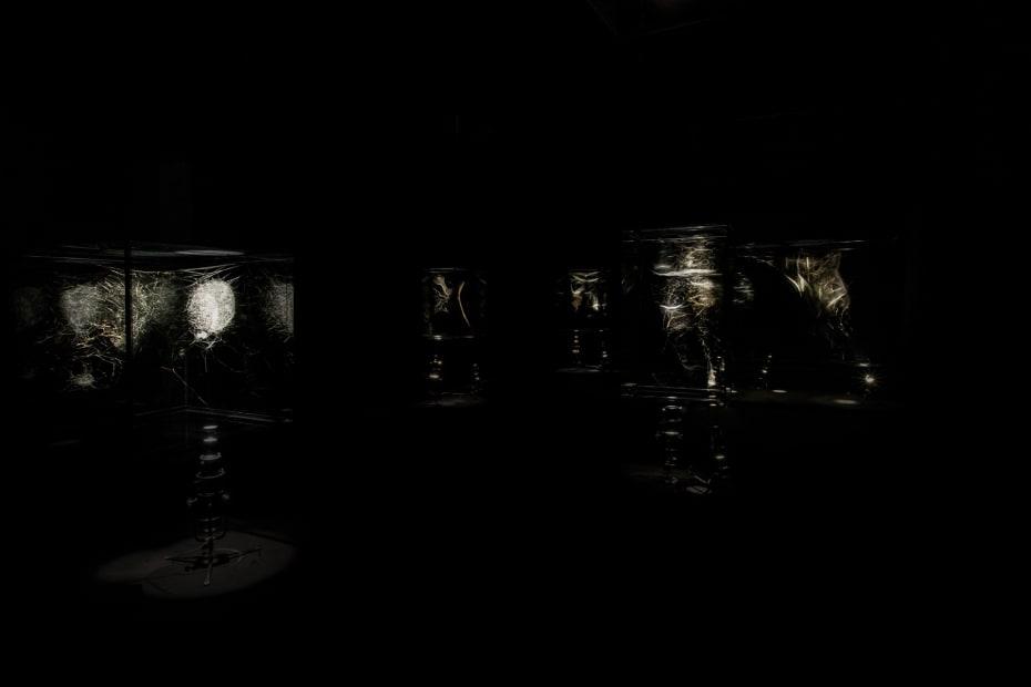 image of spotlit spider webs in dark room