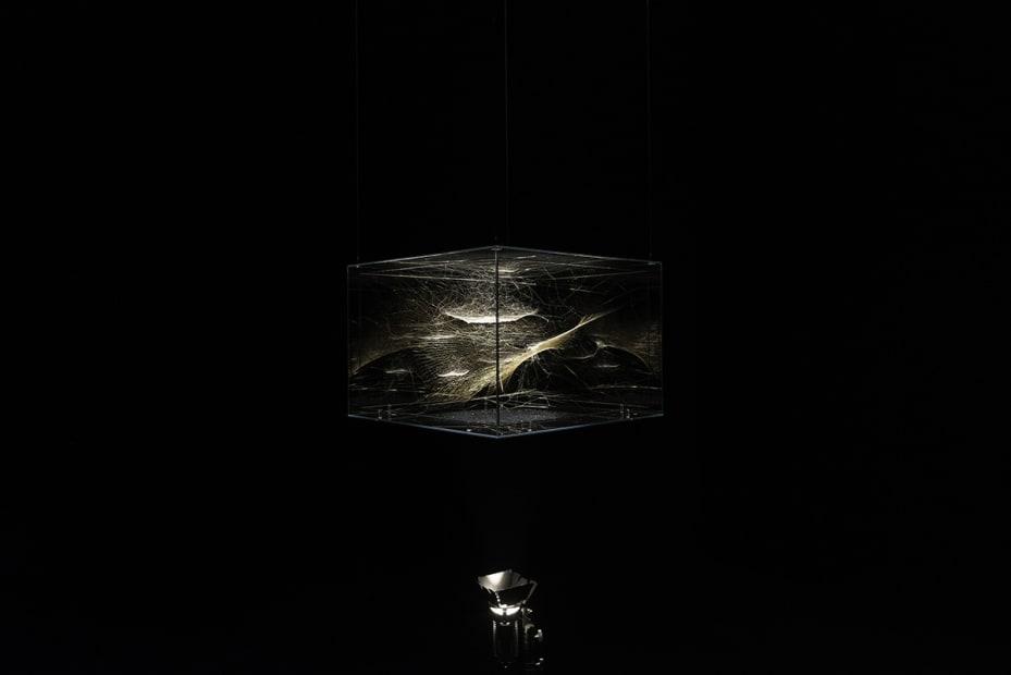 image of a Saraceno spider web sculpture spotlight