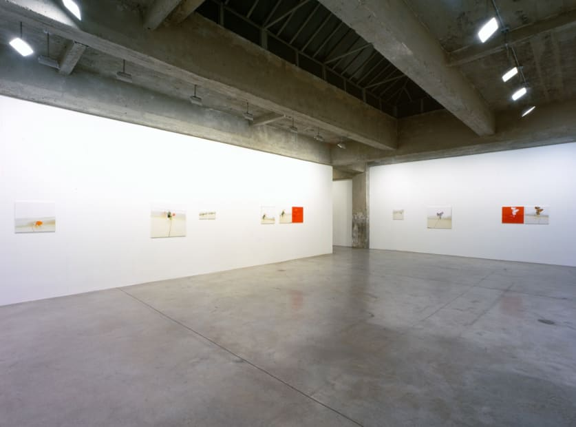 Uta barth installation view, red and white flower photos