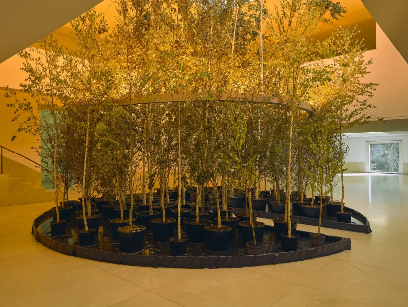 image of eliasson, trees indoors
