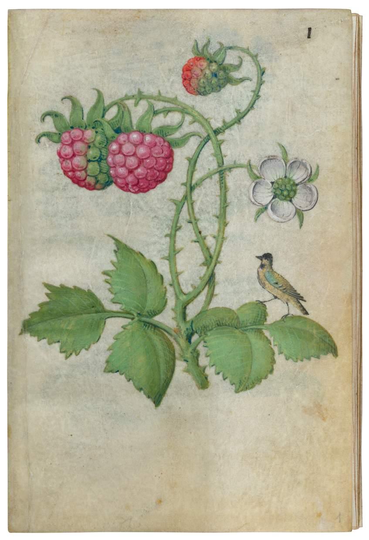 Book of Flower Studies