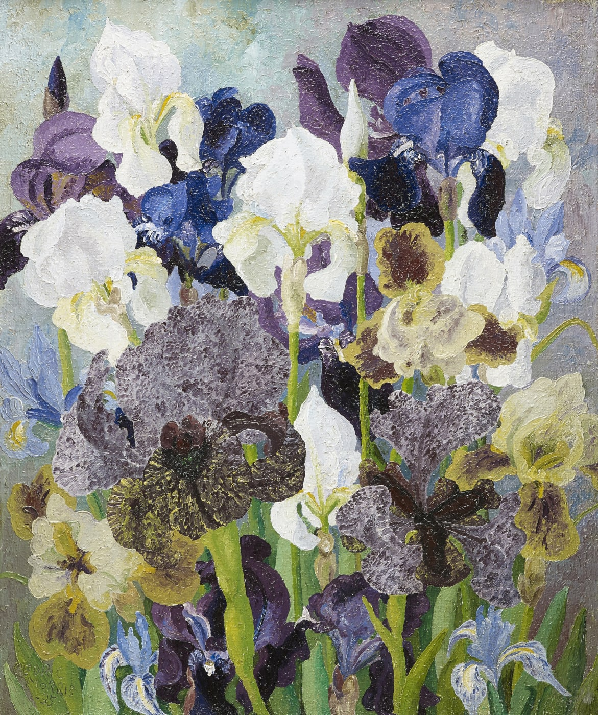 Cedric Morris May Flowering Irises no. 2