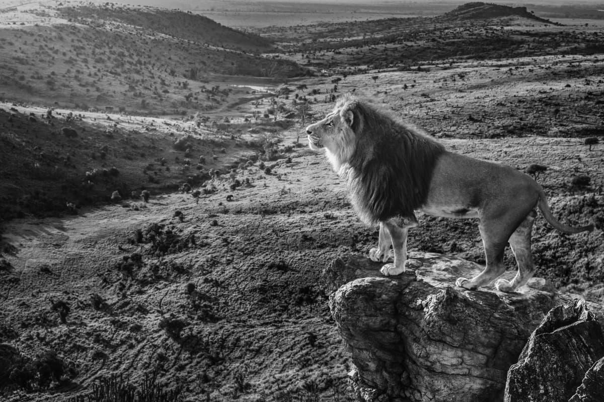 'Pride Rock' by David Yarrow