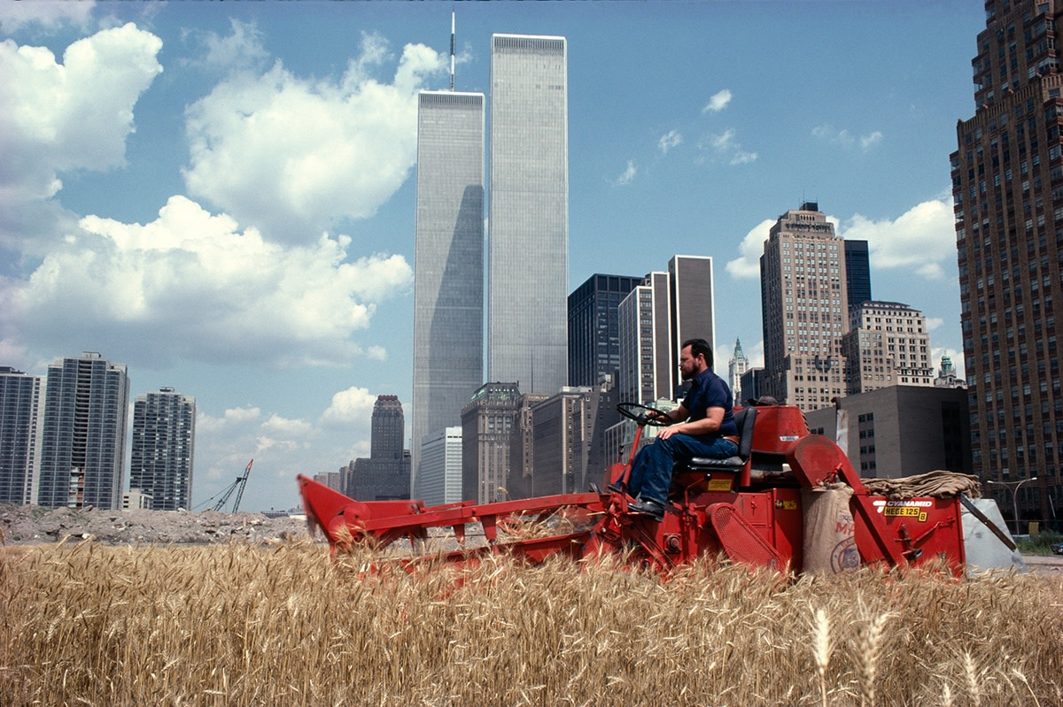 Agnes Denes, Wheatfield – A Confrontation: Battery Park Landfill, Downtown Manhattan – The Harvest, 1982, Courtesy Leslie Tonkonow Artworks + Projects, New York